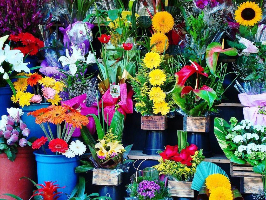 flowers-1384623_1280.jpg
